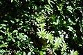 Bois des Glaisins (51195769051).jpg