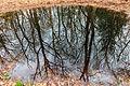 Bomen spiegelen zich in waterpoel. Locatie, natuurgebied Delleboersterheide – Catspoele 01.jpg