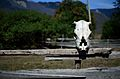 Borjomi Skull, take 2 (8357531270).jpg