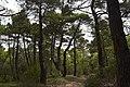Bosque - panoramio (1).jpg