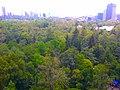 Bosque de Chapultepec - panoramio.jpg