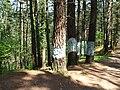 Bosque de Oma (3).JPG