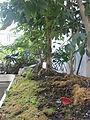 Botanička Bašta Jevremovac 019.JPG