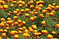 Botanic Garden (4994204424).jpg