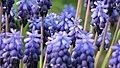 Botanic Garden - Cluj Napoca (2439446850).jpg