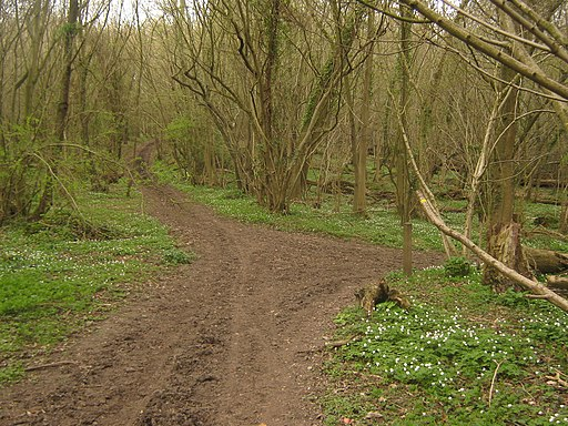Bridleway and white trail junction in Larkey Valley Wood - geograph.org.uk - 1805869