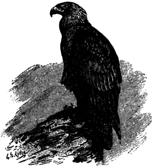 Britannica Eagle - Mountain-Eagle.png