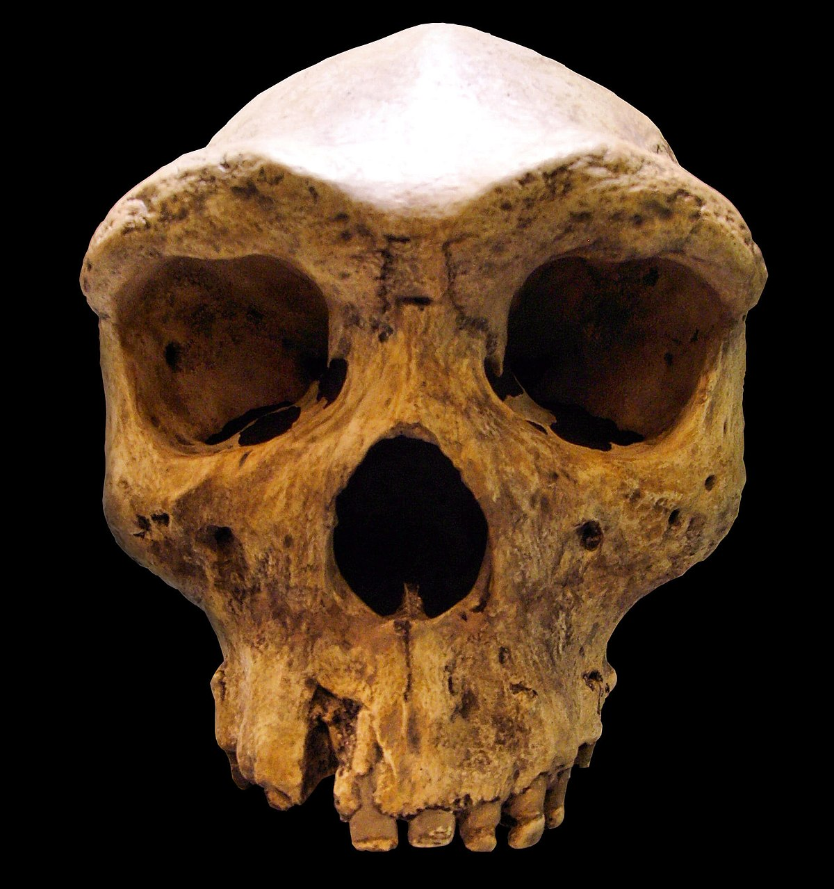 Archaic humans - Wikipedia