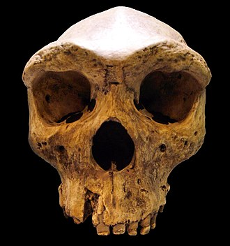 "Archaic humans - Homo rhodesiensis ""Broken Hill Cranium"": dated to either 130,000 years ago (using amino acid racemization determination) or 600,000 to 800,000 years ago (within the same time as Homo erectus), depending on which dating method is used."