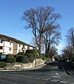 Bronshill Road, Torquay - geograph.org.uk - 661176.jpg