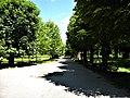 Bucuresti, Romania. GRADINA BOTANICA. O alta alee in parc. (B-II-a-B-18508).jpg