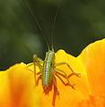 Bug - 虫(むし) (7230208540).jpg