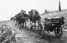a soldier leading a team of two horses pulling a mountain gun up a hill