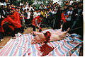 Butchering a pig in North Vietnam.jpg