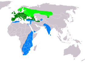 Buteo buteo distribution map.png