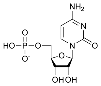 Ribonucleotide - Structure of cytidine 5'-monophosphate (CMP)