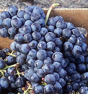 Cabernet Franc - Cabernet Franc grapes