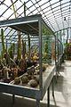 Cactacées-Jardin des plantes de Nantes (1).jpg