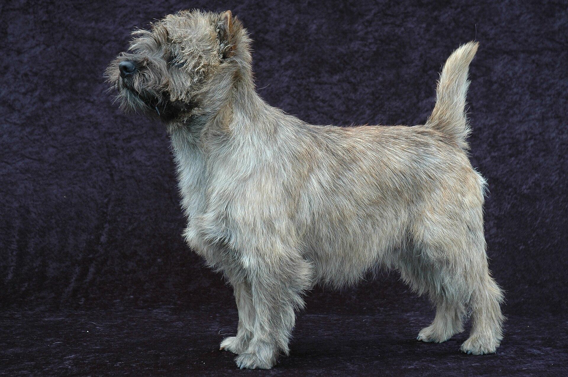 How these 12 dog breeds got their original names 15