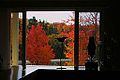 Canadian window + indian summer.JPG