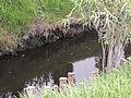 Canal que fluye en el Humedal.JPG