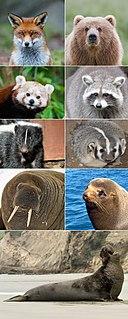 suborder of mammals
