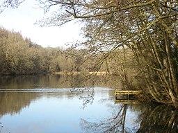 Cannop Ponds - January 2012 - panoramio