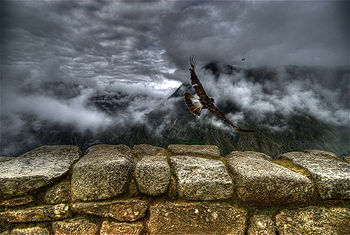 Caracara takes off at Machu Picchu-original.jpg