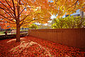 Carnegie Mellon University red leaves in the fall.jpg