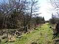 Carsegowan Moss track - geograph.org.uk - 1231849.jpg