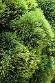 Caserta jardín inglés. 38.JPG