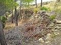 Castell de Tales DSCN2943.JPG