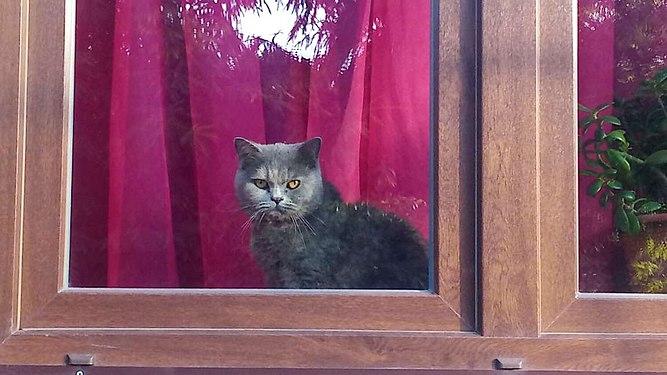 Cat in the window .jpg