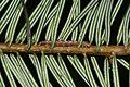 Caterpillar hiding - Flickr - S. Rae.jpg