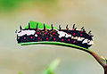 Caterpiller by N A Nazeer.jpg