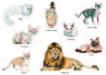 Cats - Adrienn Pomper.jpg