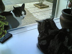 Two cats crouch, facing each other, on either side of a window. Both cats ears are angled back.