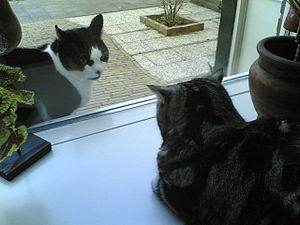 Cat Sitting Purring Gif Cgi