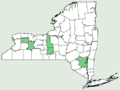 Centaurea solstitialis NY-dist-map.png