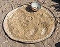 Chad 2019 Yao near lac Fitri millet DSC4727.jpg
