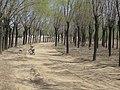 Changping, Beijing, China - panoramio (45).jpg