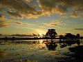 Cheia no Pantanal - MT.jpg