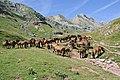 Chevaux estive Pyrenees GR11.jpg