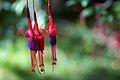 Chile - Cochamó climbing 88 - delicate flowers (6873789450).jpg