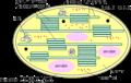 Chloroplaste-schema.png