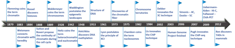Timeline of chromatin structure studies