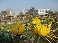 Chrysanthemum in yellow shade.jpg