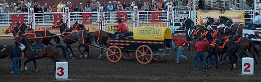 Chuckwagon races at Calgary Stampede