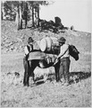 Cinching and loading pack mule with flour during starvation march of Gen. George Crook's expedition into the Black Hills - NARA - 533171.tif