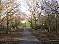 Collington Woods Bexhill-on-Sea East Sussex - geograph.org.uk - 109135.jpg